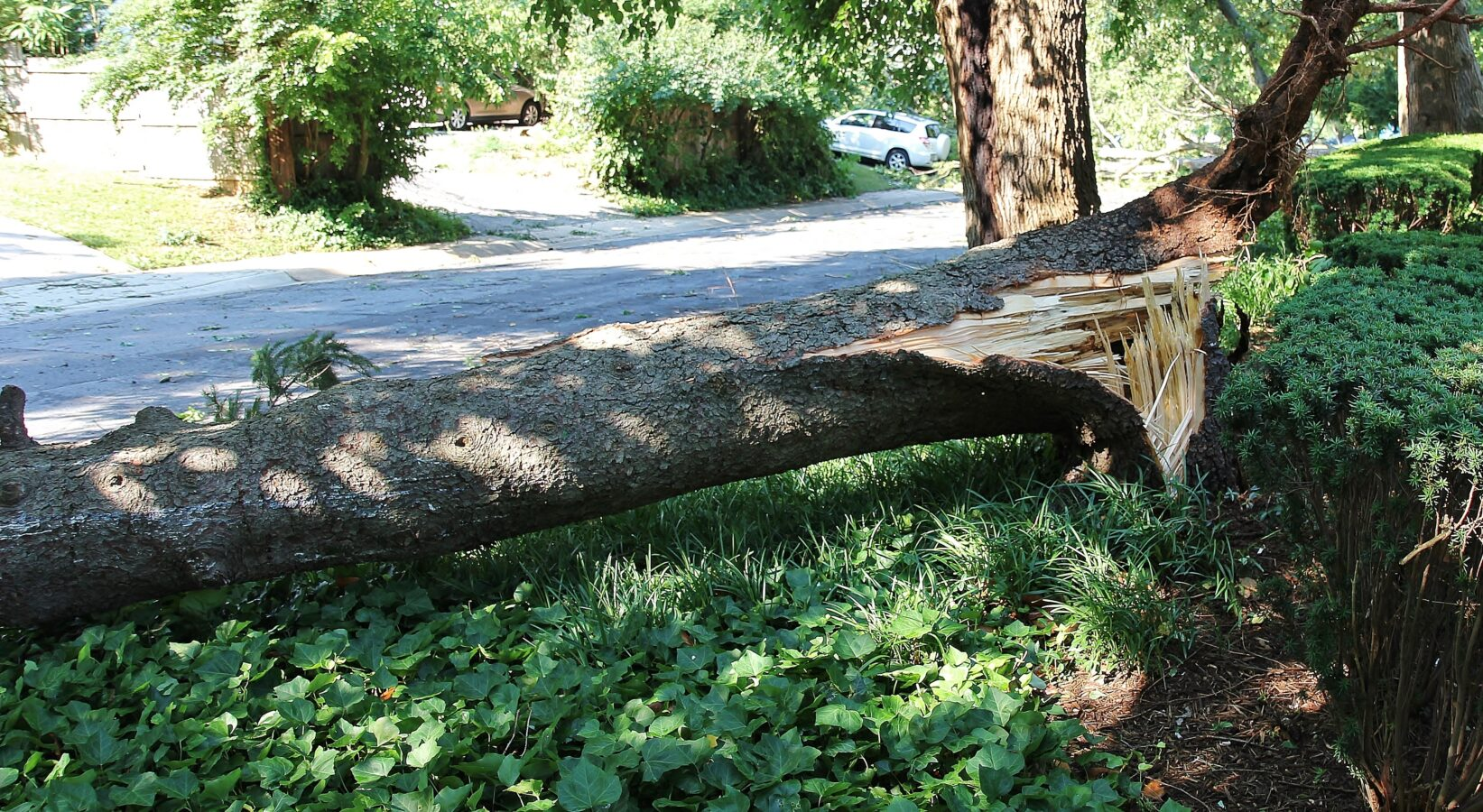 Damaged and Fallen Trees: Legal Rights in Maryland, Virginia, and DC
