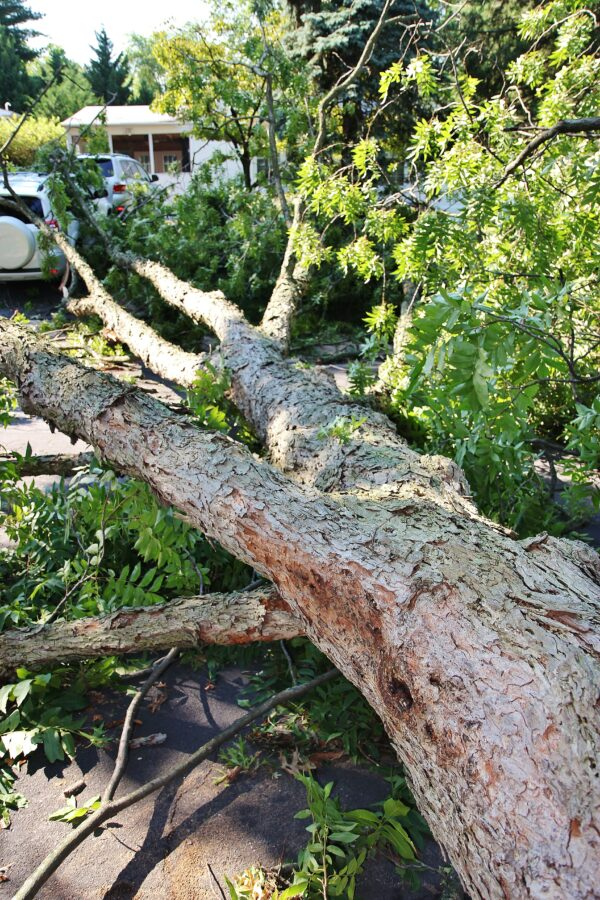 Legal Liability for Tree Damage in Maryland, Virginia, and